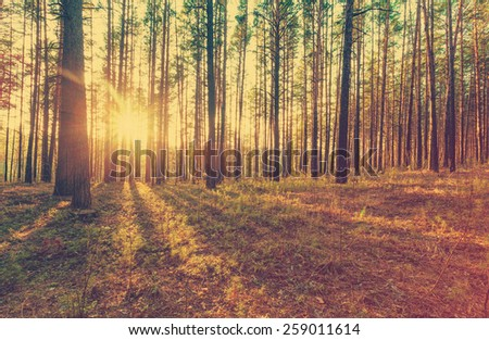 beautiful sunset in the woods, retro film filtered, instagram style  - stock photo