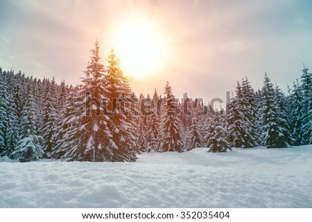 Beautiful sunset in winter forest Jluia Alps in Slovenia - stock photo