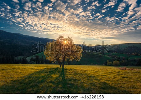 Beautiful sunset landscape. Sunbeams shining through a lonely tree crone on a hill in Carpathian mountains at sunset. - stock photo
