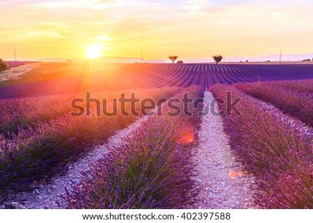 Beautiful sunset lavender field summer landscape near Valensole.Provence,France - stock photo