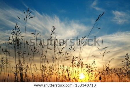 Beautiful sunset on a background of field plants