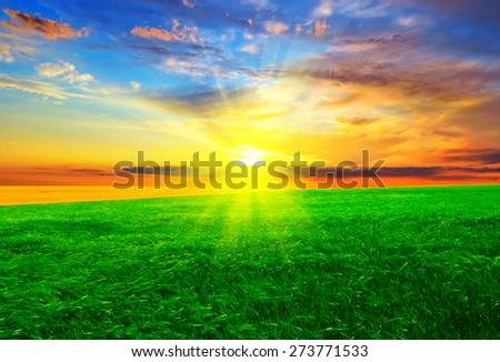 Beautiful sunset on an unfocused green field.  Summer landscape.