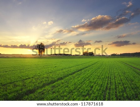 beautiful sunset on green filed - stock photo