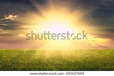 beautiful sunset on  rural field of fresh green grass, natural vintage background