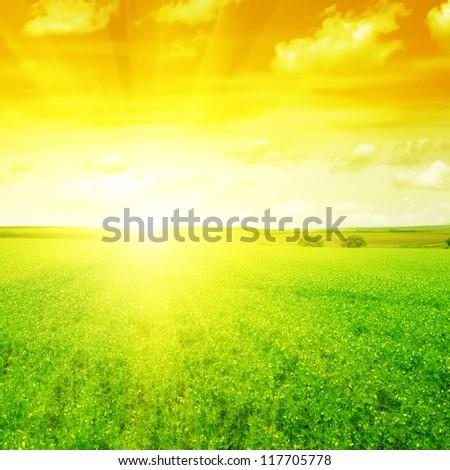 Beautiful sunset on spring field - stock photo