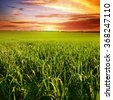 Beautiful sunset on wheat field - stock photo