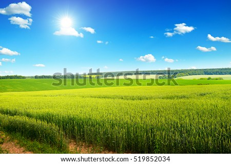 Beautiful sunset on wheat field and blue sky
