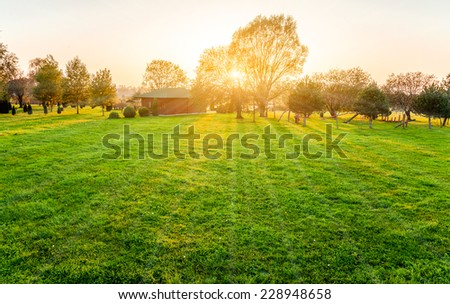 beautiful sunset over a tree and meadow. - stock photo