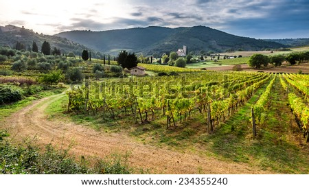 Beautiful sunset over a vineyard in Tuscany - stock photo