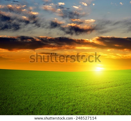 Beautiful sunset over green field.  - stock photo