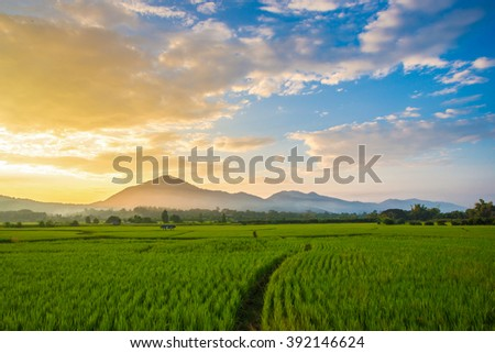 Beautiful sunset over the green field, Chiang Mai, Thailand.