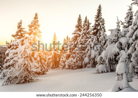 Beautiful sunset over the high mountains Alps Austria - stock photo
