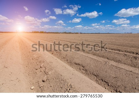 Beautiful sunset over the large brown field with numerous straight rows - stock photo