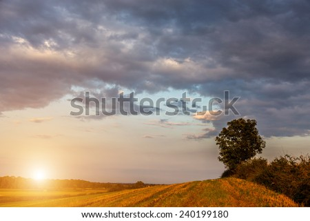 Beautiful sunset over the large green field - stock photo