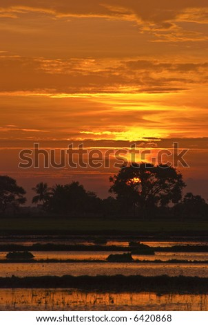 Beautiful sunset over the rich paddy fields of south india