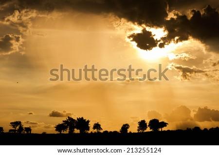 Beautiful sunset over the savannah - stock photo