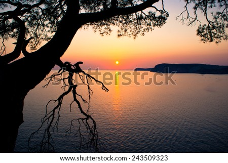beautiful sunset over the sea and picturesque tree