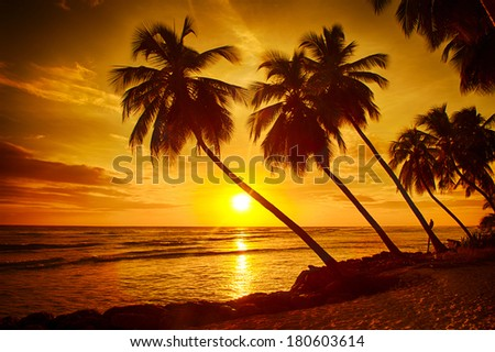 Beautiful Sunset Over The Sea With A View At Palms On White Beach