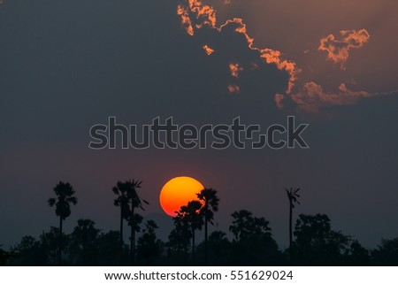 Beautiful sunset with silhouette of sugar palm trees.