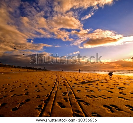 beautiful sunset with tire tracks and a dog running towards the camera - stock photo