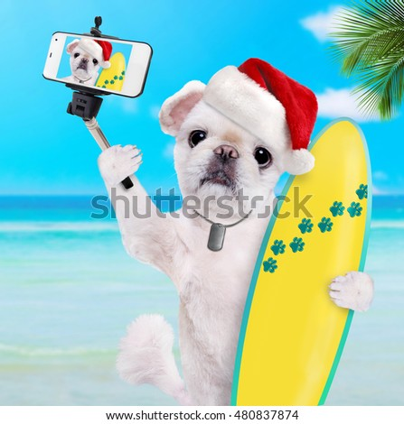 Beautiful surfer dog  in red Christmas hat on the beach taking a selfie together with a smartphone.