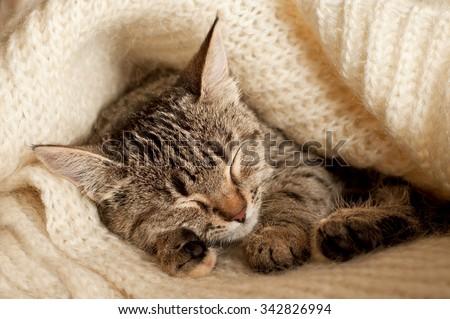 Beautiful tabby kitten sleeping on a white wool  - stock photo