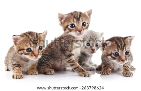 beautiful tabby kittens on a white background - stock photo