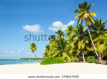 Beautiful tall palm trees and white sandy beach on exotic island against azure water and blue sky - stock photo
