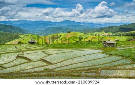 Beautiful Terrace Rice Farm Of Pa Bong Peang Chiang Mai, Thailand - stock photo
