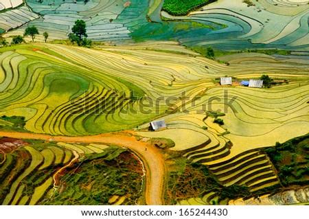 Beautiful terraced rice field in water season in Laocai province in Vietnam  - stock photo