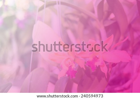 Beautiful Thai orchid flower background