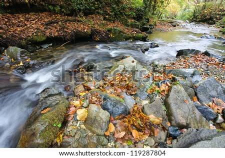 Beautiful the river in mountain forest