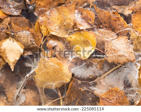 beautiful thin ice with fancy patterns on a puddle with yellow autumn leaves  - stock photo