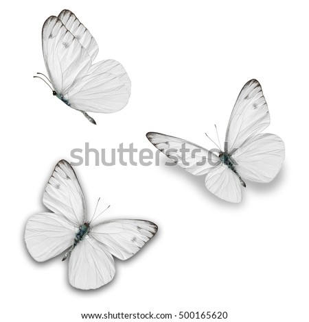 Beautiful three white butterfly isolated on white background.