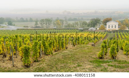 Beautiful traditional rich growing european foggy autumn vineyard hills  - stock photo