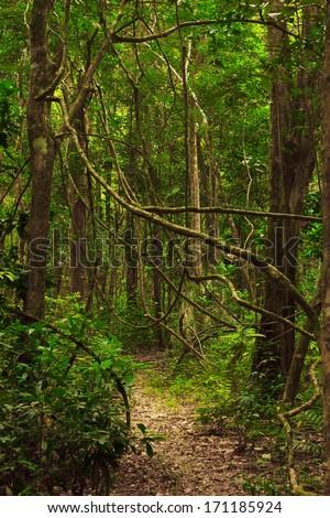 Beautiful trail in the jungle of Tarutao island, Tarutao national park, Thailand - stock photo