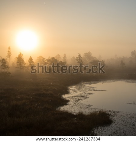 Beautiful tranquil landscape of misty swamp lake with mist and boardwalks - square image - stock photo