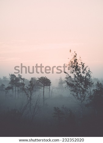 Beautiful tranquil landscape of misty swamp lake with mist and boardwalks. Vintage effect.