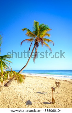 Beautiful tranquil scenic view of summer beach landscape with palm trees, Tulum, Mexico - stock photo