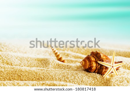 Beautiful tranquil tropical beach with seashells and a starfish lying on the rippled golden sand on a hot summer day with copyspace - stock photo