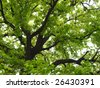 beautiful tree - stock photo