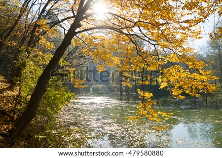 Beautiful tree at the lake in autumn