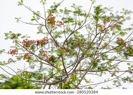 Beautiful tree branches against green leaf  - stock photo