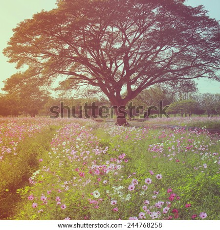 Beautiful tree in flowered field with retro filter effect - stock photo