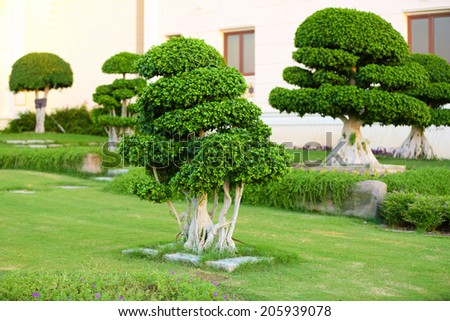 Beautiful tree in park - stock photo