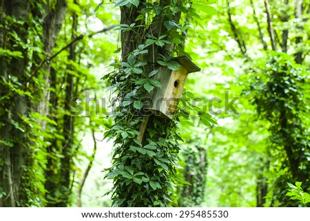 Beautiful tree in scenic green forest - stock photo
