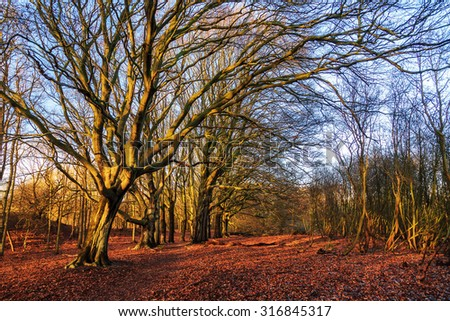 Beautiful tree in the afternoon sun in national park the AWD in the Netherlands in winter