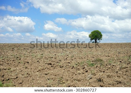 beautiful tree in the plowed earth