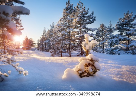 Beautiful tree in winter landscape in late evening - stock photo