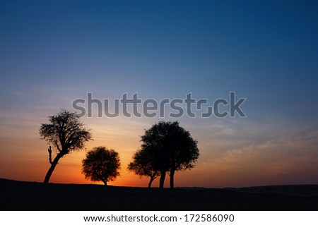Beautiful tree landscape in Dubai desert, UAE
